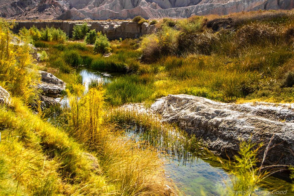 Beautiful Prime Habitat along the Amargosa River