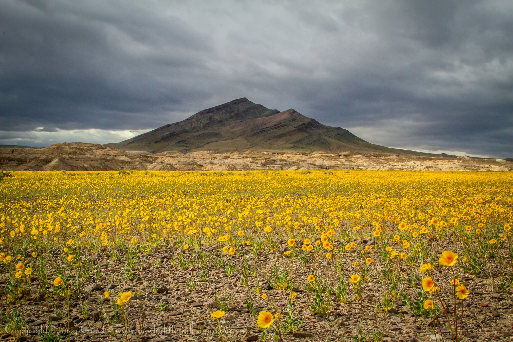 Superbloom Continues, Grows
