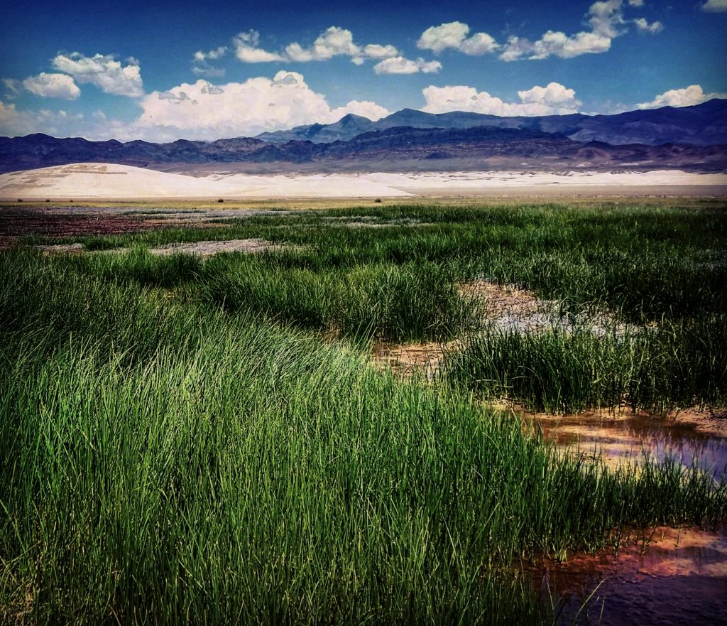 The marsh began bouncing back just a few weeks after the Big Fix. Photo: Patrick Donnelly