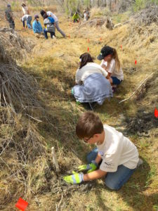 Volunteers planting willows