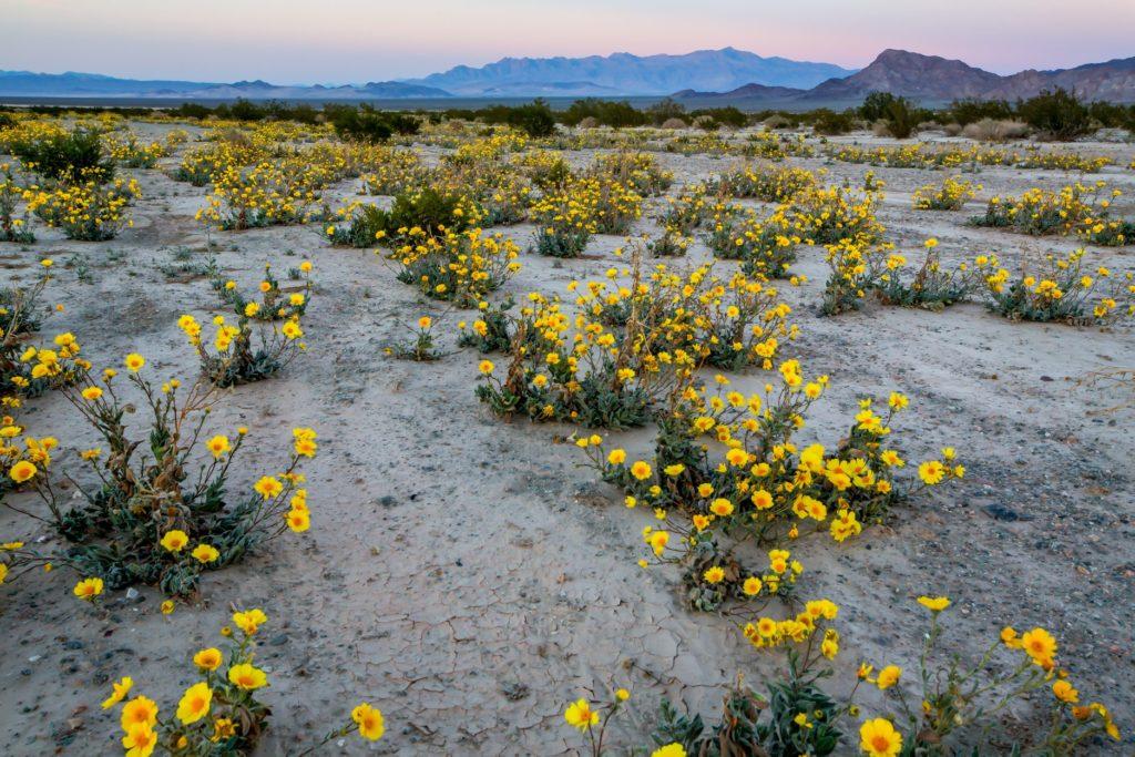 Courtesy Campaign for the California Desert